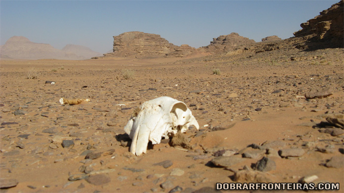 No deserto a morte espreita é implacável
