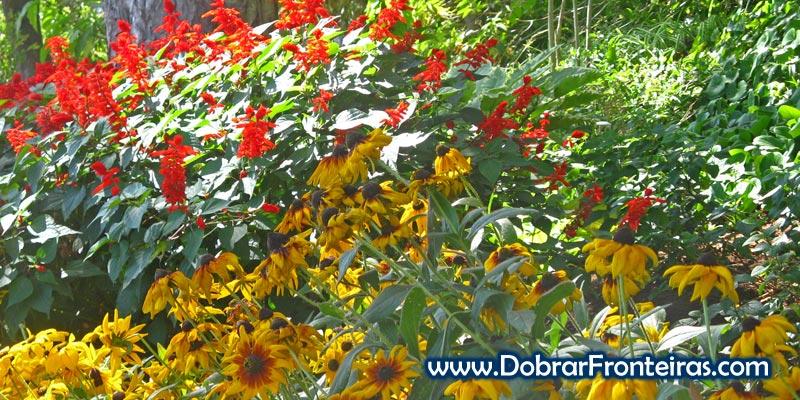 Flores no Jardim Botânico
