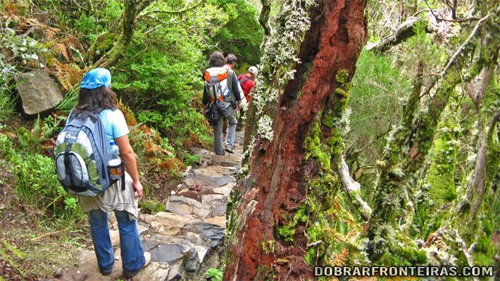 Caminhantes na floresta Laurissilva na ilha da Madeira