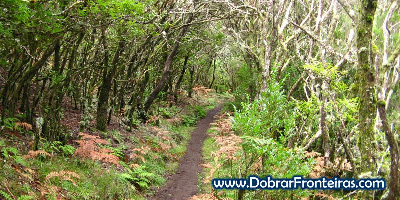 Trilho na floresta Laurissilva na ilha da Madeira