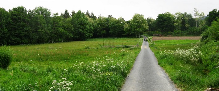 Caminho verdejante