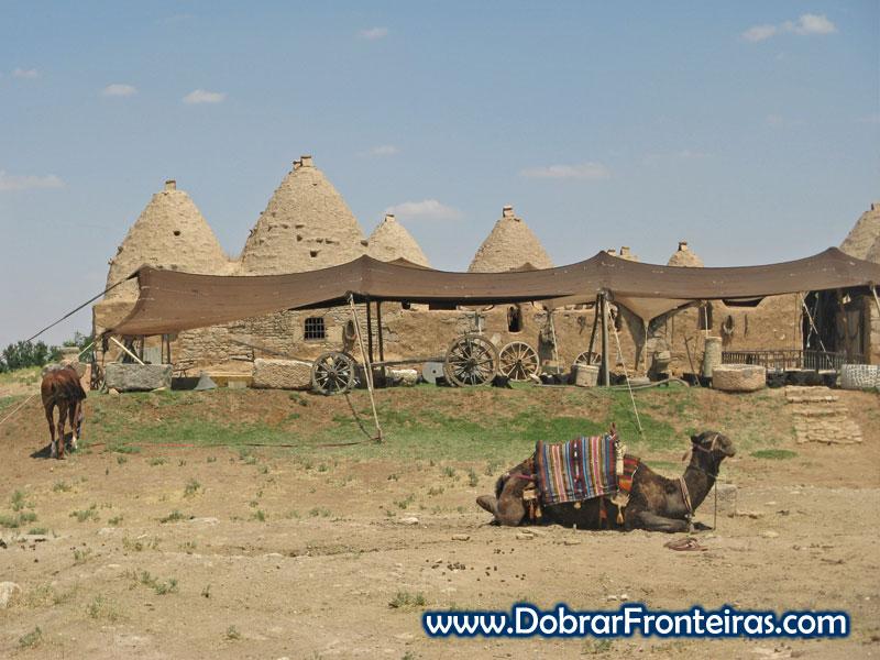 Camelo junto às casas colmeia
