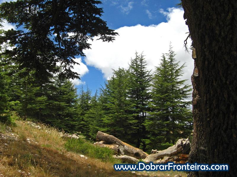 Floresta dos Cedros Líbano