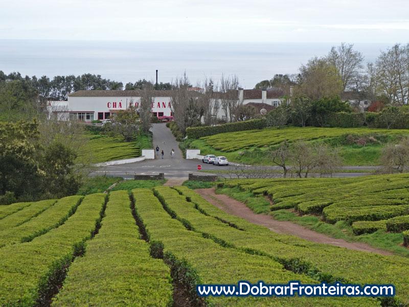 Campos de Chá e fábrica da Gorreana na ilha de são miguel