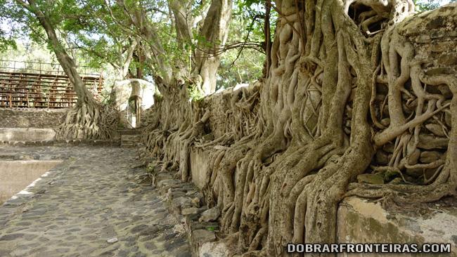 Raízes de árvores na piscina de Fasiladas, Gondar
