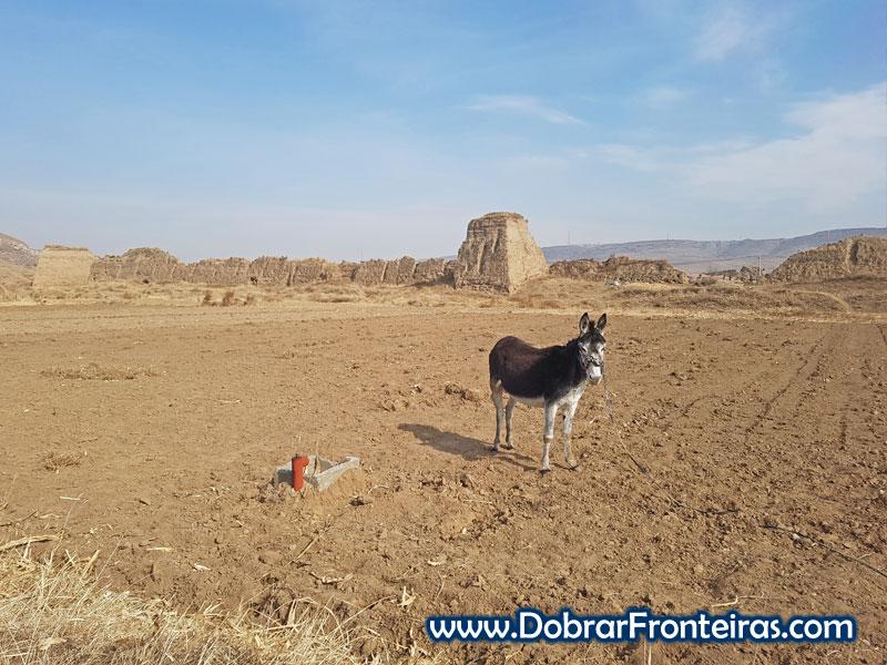 Deshengbao burro china