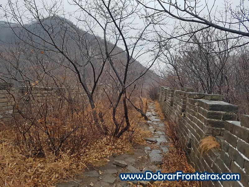 muralha da china ruinas arvore