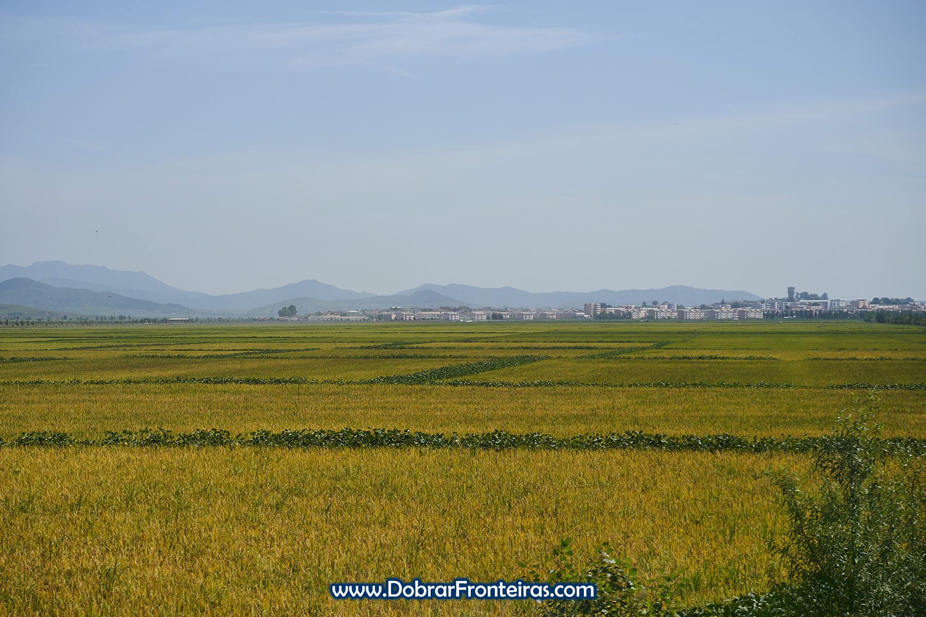 Campos de arroz e soja com montanhas ao fundo