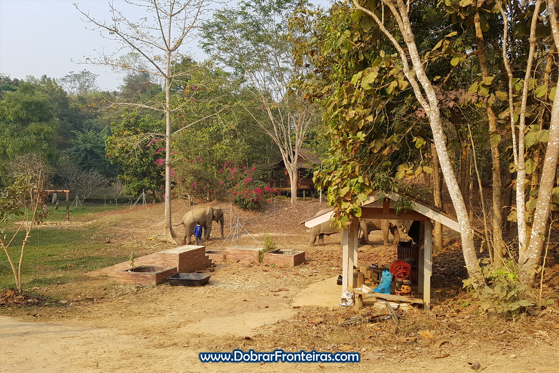 elefantes em santuário na Tailândia