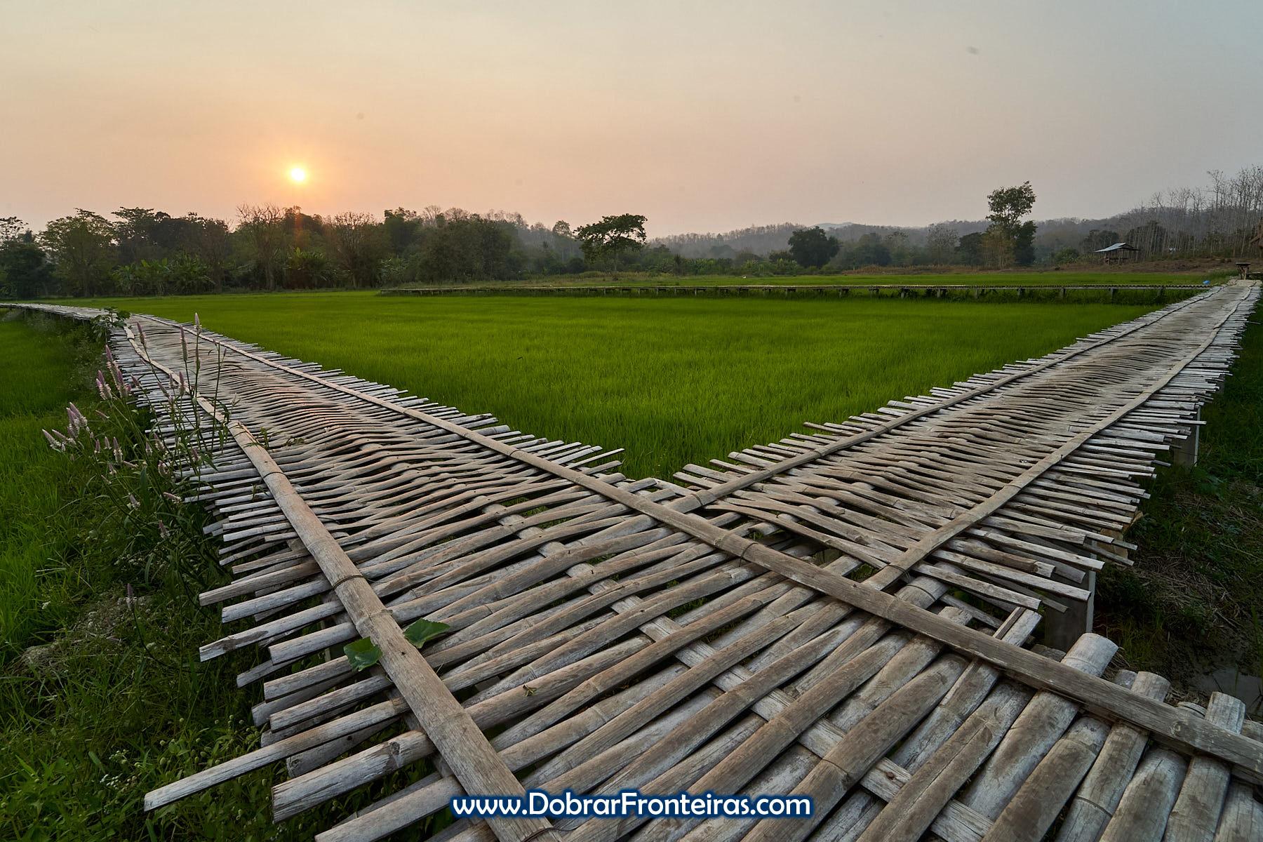 por do sol sobre arrozal com passadiço de babú na Tailândia