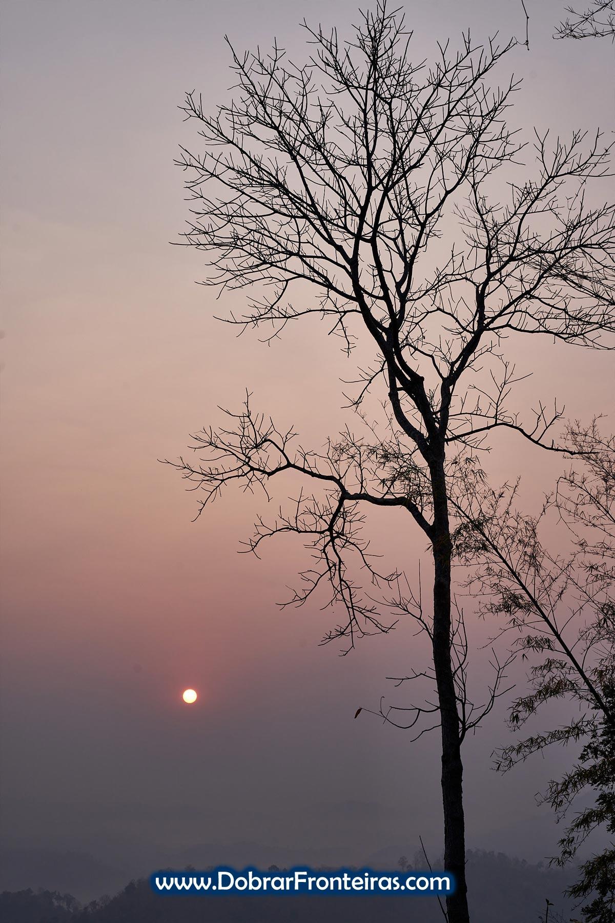 Nascer do sol com árvore
