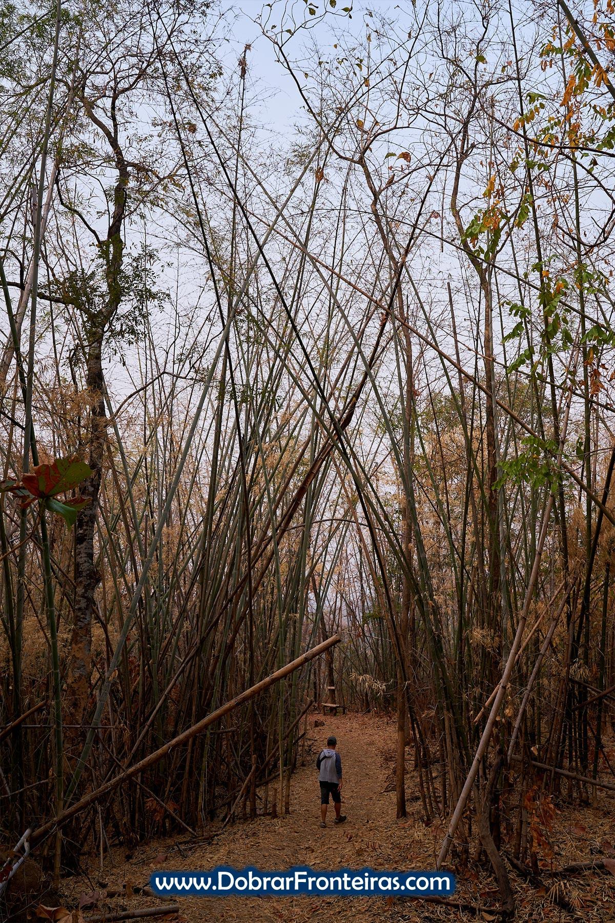 homem em floresta de bambu