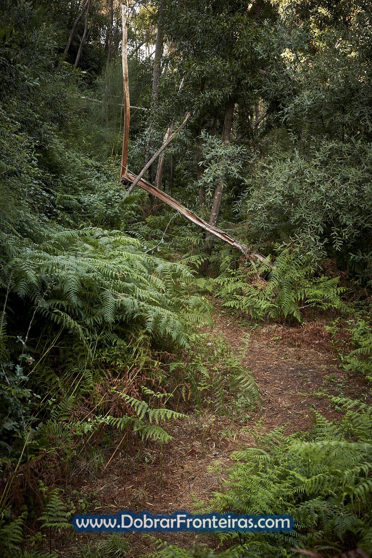 Trilho pedestre com vegetação