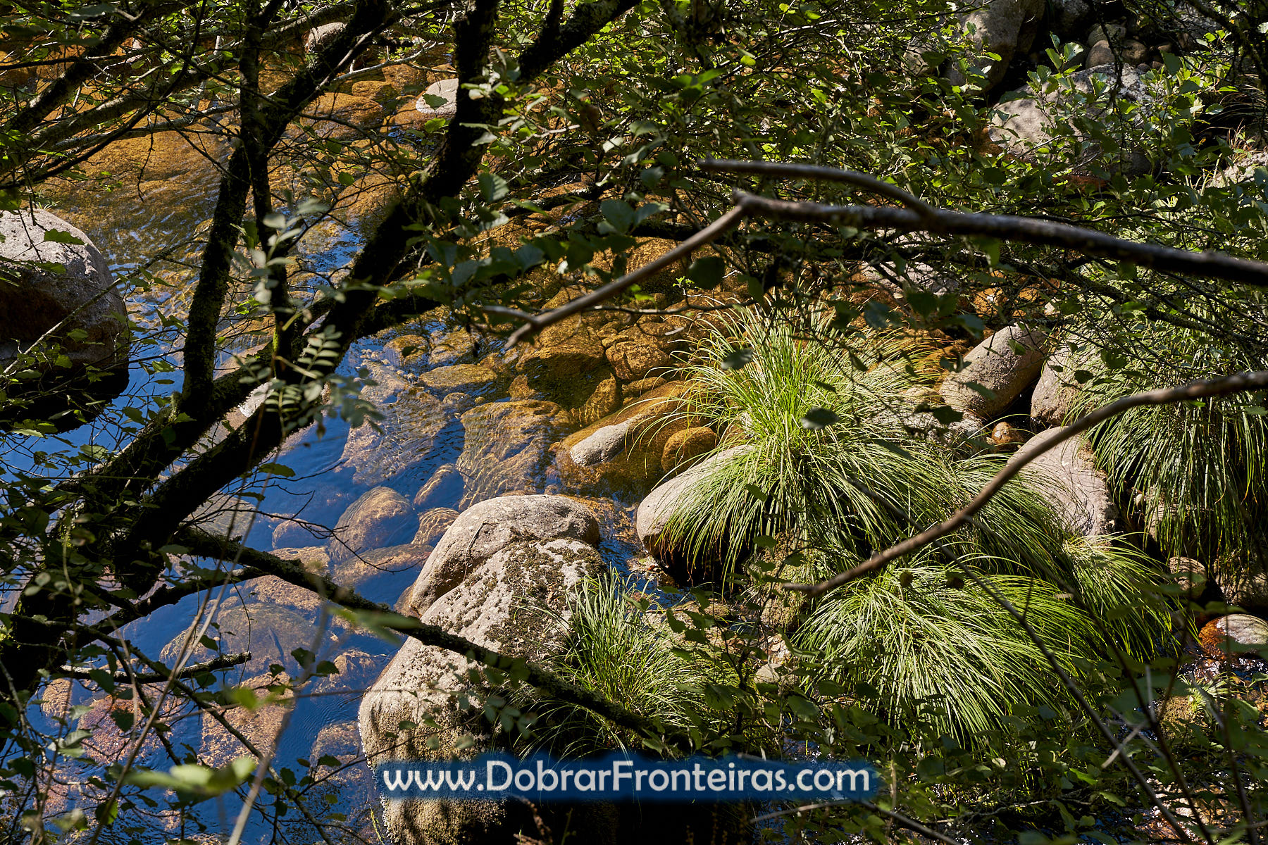 Águas límpidas do rio Vez com pedras e plantas