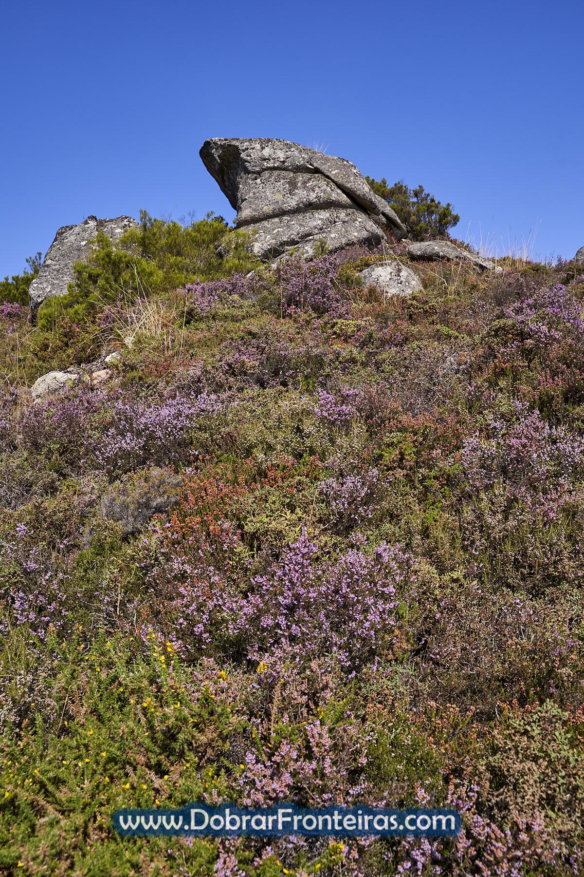 Plantas floridas na serra da Peneda Gerês
