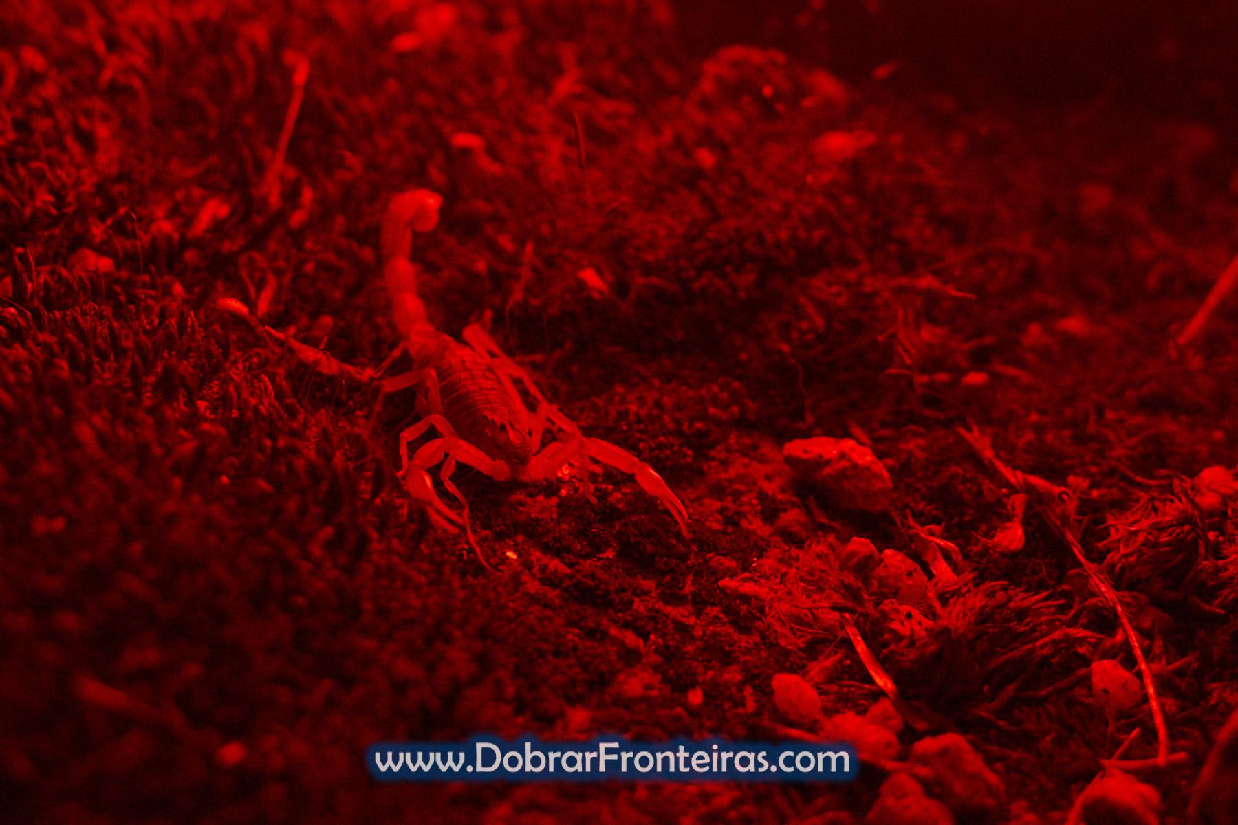 escorpião no vale do Tua