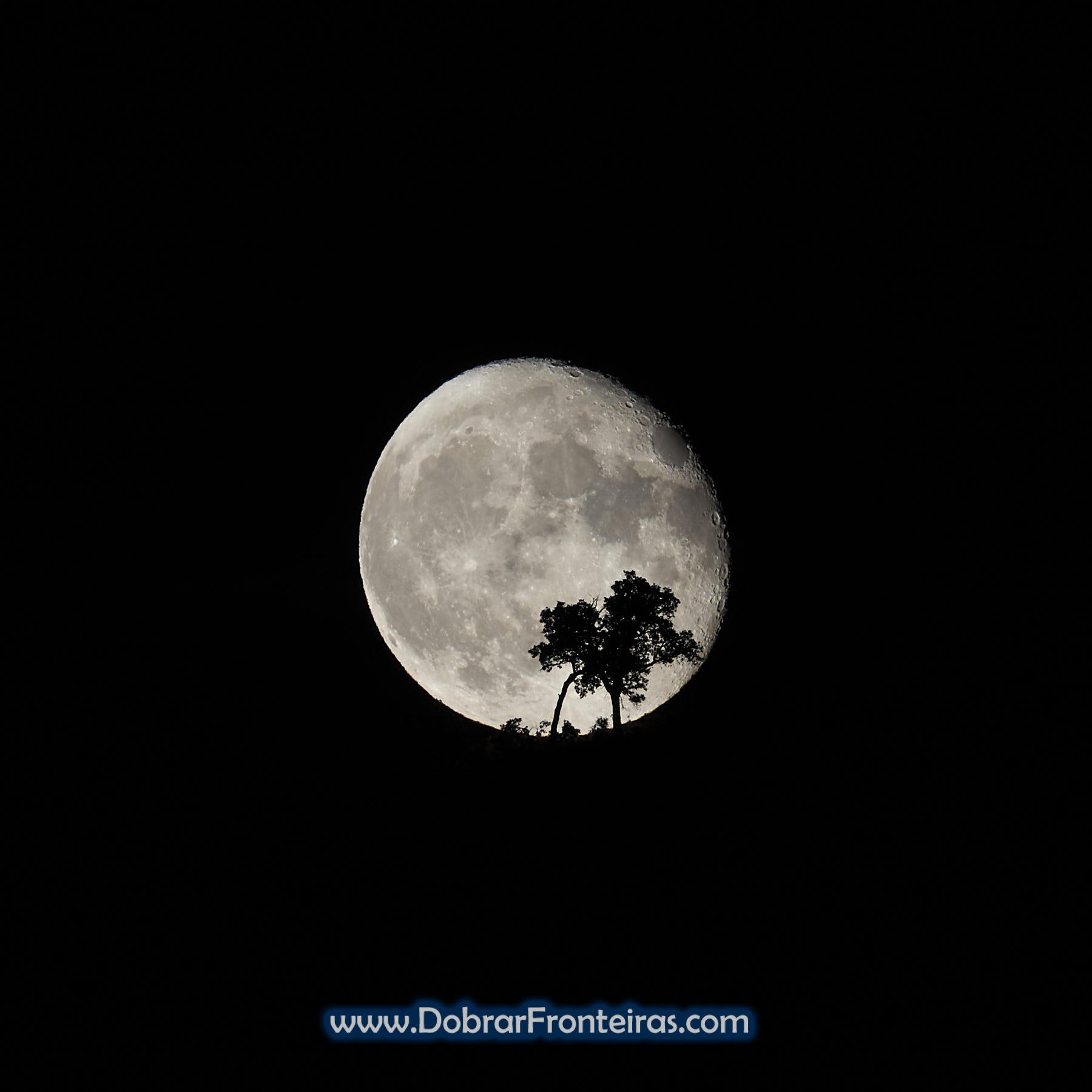 Lua Cheia gigante atrás de árvore