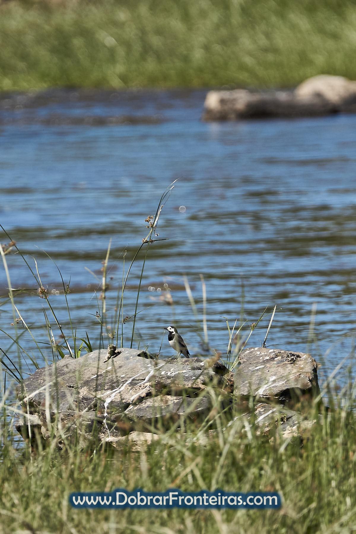 pássaro nas margens do rio Tua